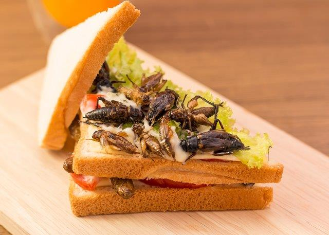 Insect sandwich