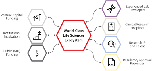 JLL chart of components for ideal life sciences ecosystem
