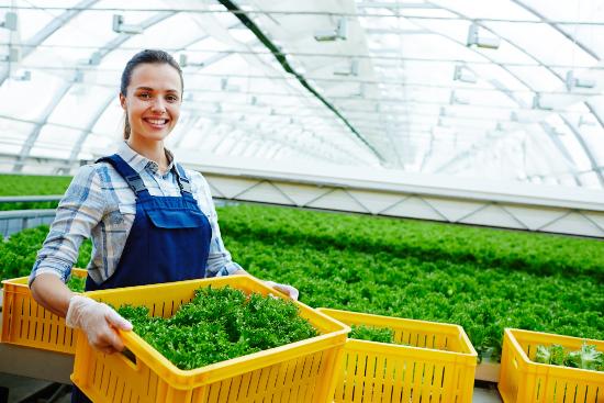 AgBiome salad greenhouse